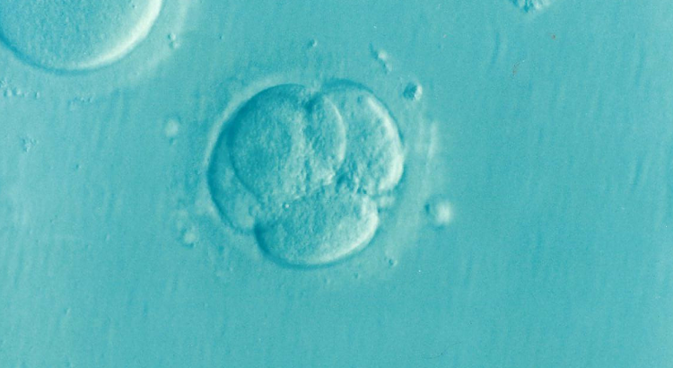 Frozen embryos: a heartwarming tale of adoption